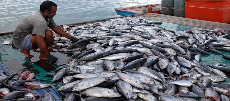 Dukung Sektor Perikanan, <br/>PLN Pasok Listrik ke Kapal